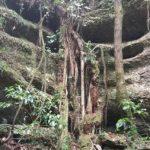 Grove Scenic Reserve, Takaka, South Island