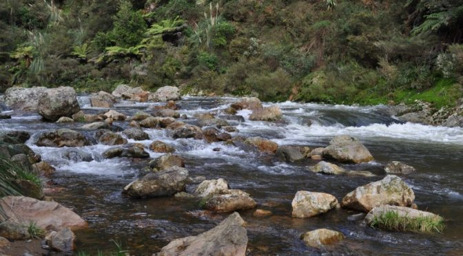 Karangahake Gorge Walks