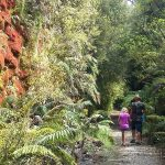 Hiking the Charming Creek Walkway, Westport, South Island