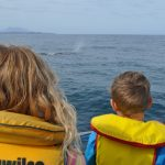 Whale watching, Kaikoura, South Island